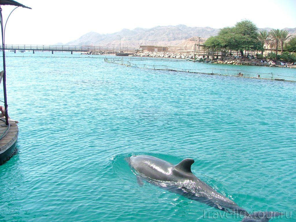 Дельфиний риф на красном море