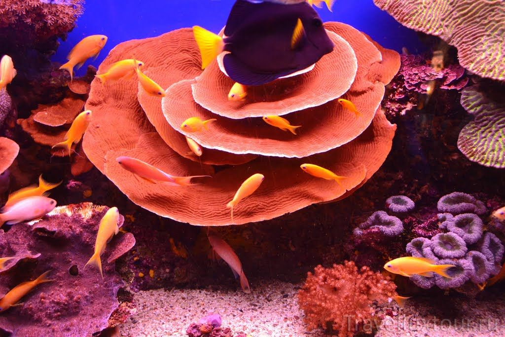 Коралловые рифы красного моря